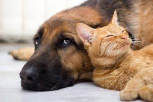 Custody of the Family Pet in a Divorce in Arizona.